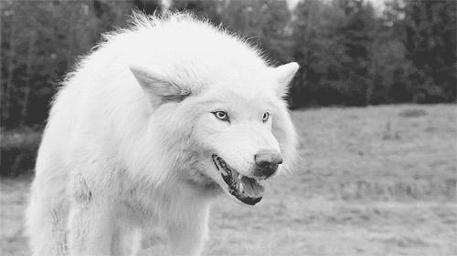 La meute wolfia débarque tel une ombre sur Londres 31680310