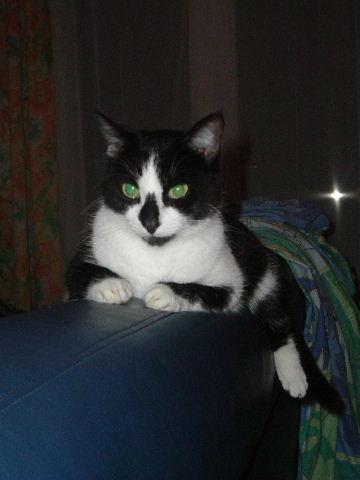 Des chats superbes ! - Page 93 Remise14