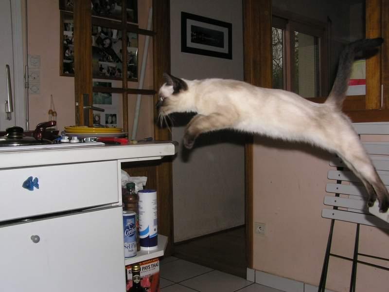 Des chats superbes ! - Page 93 Shakti19