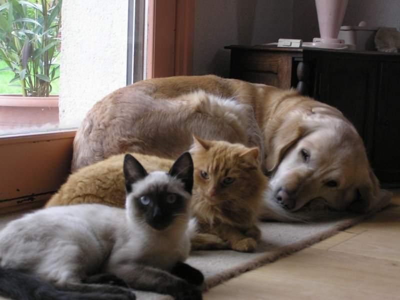Des chats superbes ! - Page 93 Shakti23