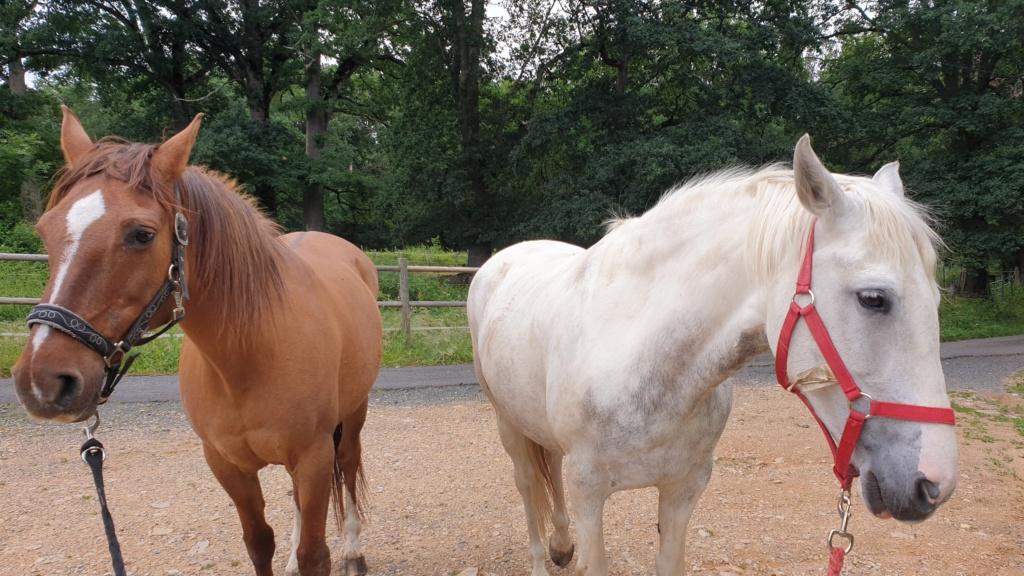 (Dept 63) DUN,  fjord/quarter horse, Sauvée par Morgane63 ! (Octobre2012) - Page 9 20200614