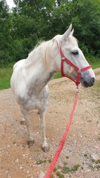 (Dept 63) DUN,  fjord/quarter horse, Sauvée par Morgane63 ! (Octobre2012) - Page 9 20200615