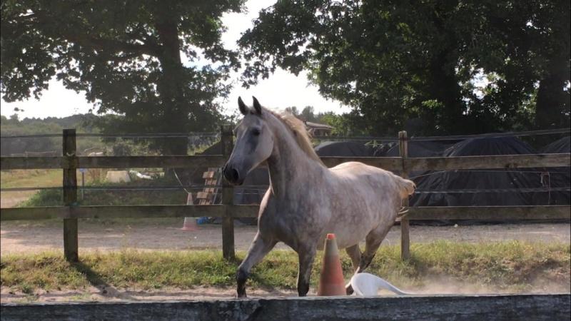 (Dpt 63)  CALYPSO, ONC, Adoptée par le centre equestre de pluvigner (Août 2014) - Page 12 40418510