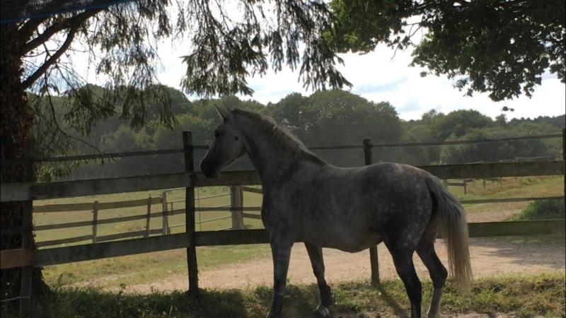 (Dpt 63)  CALYPSO, ONC, Adoptée par le centre equestre de pluvigner (Août 2014) - Page 12 40424610