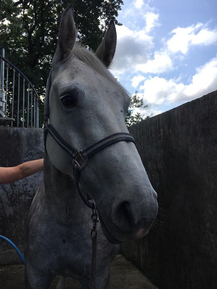 (Dpt 63)  CALYPSO, ONC, Adoptée par le centre equestre de pluvigner (Août 2014) - Page 12 40588310