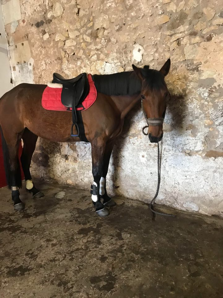 Dpt 17, 3 ans, Ganaya de Cravans, adoptée par Séléna (mars 2019) 96868910
