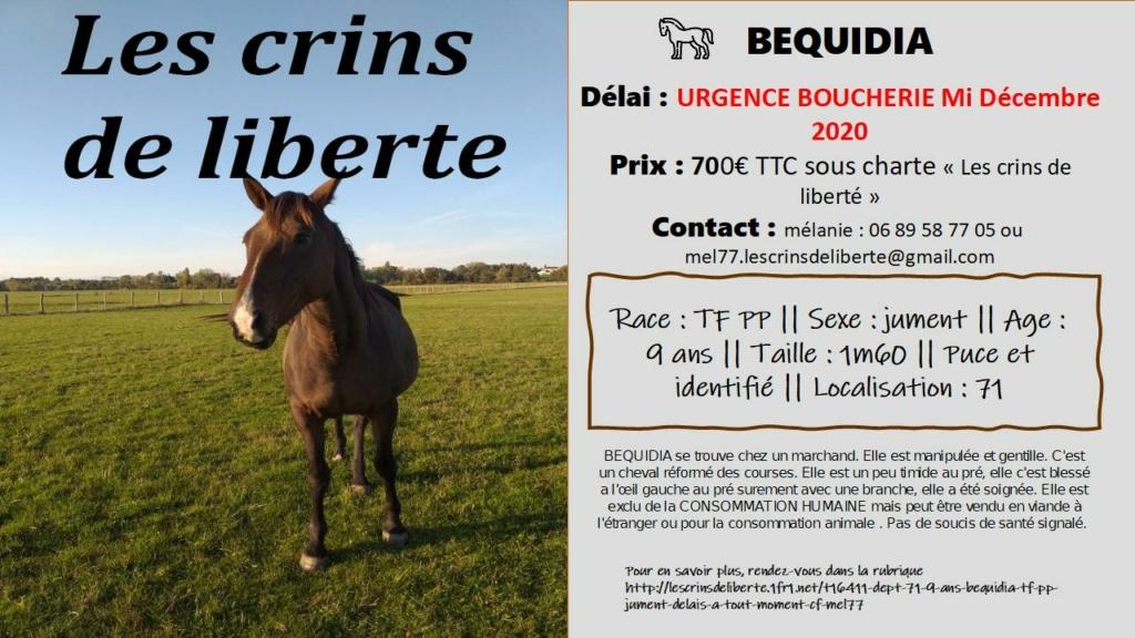 (Dept 71) 9 ans - BEQUIDIA - TF PP - Jument - Réservée par Laura G. (nov 2020) Bequid10