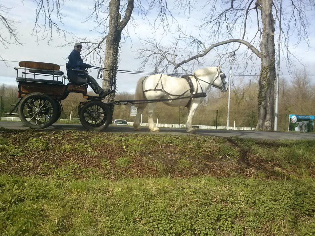 (Dépt 63) Belette - Ardennais x Percheron 1, sauvé par Elisabeth et Roland (Novembre 2012) - Page 7 Cam00614