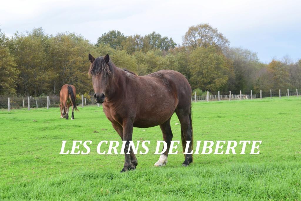 (Dept 71) 19 ans - NOISETTE - ONC poney - Jument- PARTI ESPAGNE  Dsc_0125