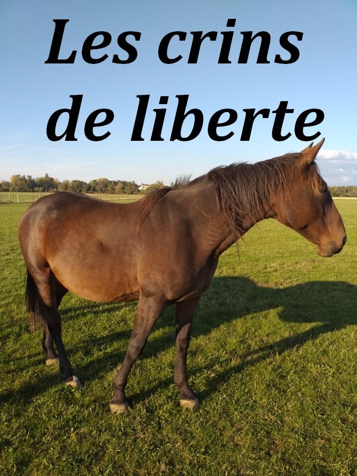 (Dept 71) 9 ans - BEQUIDIA - TF PP - Jument - Réservée par Laura G. (nov 2020) Image_19