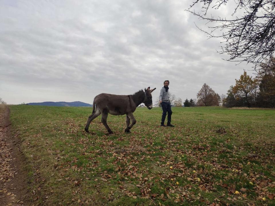 (dept 71) 1 an -POUPY - änon gris - mâle - réservé par christelle (aout 2020) Image_43