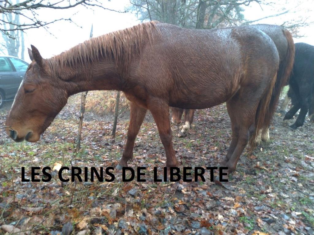 (Dept 38) 1 an - GAZELLE - ONC Selle - Jument - Réservé par catherine G. (mars 2020) Img_0138