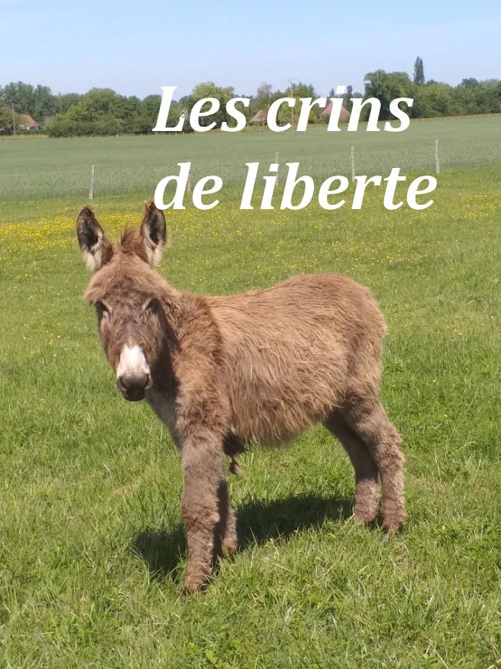 (dept 71) 1 an -POUPY - änon gris - mâle - réservé par christelle (aout 2020) Img_1354