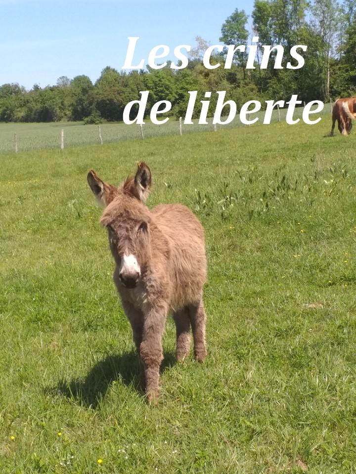 (dept 71) 1 an -POUPY - änon gris - mâle - réservé par christelle (aout 2020) Img_1355