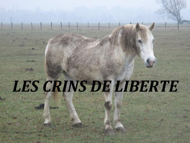 (Dept 71) 19 ans - LiTTLE LiLLY - Camargue PP - Jument - Réservée par Nadia (mars 2019) Img_1416