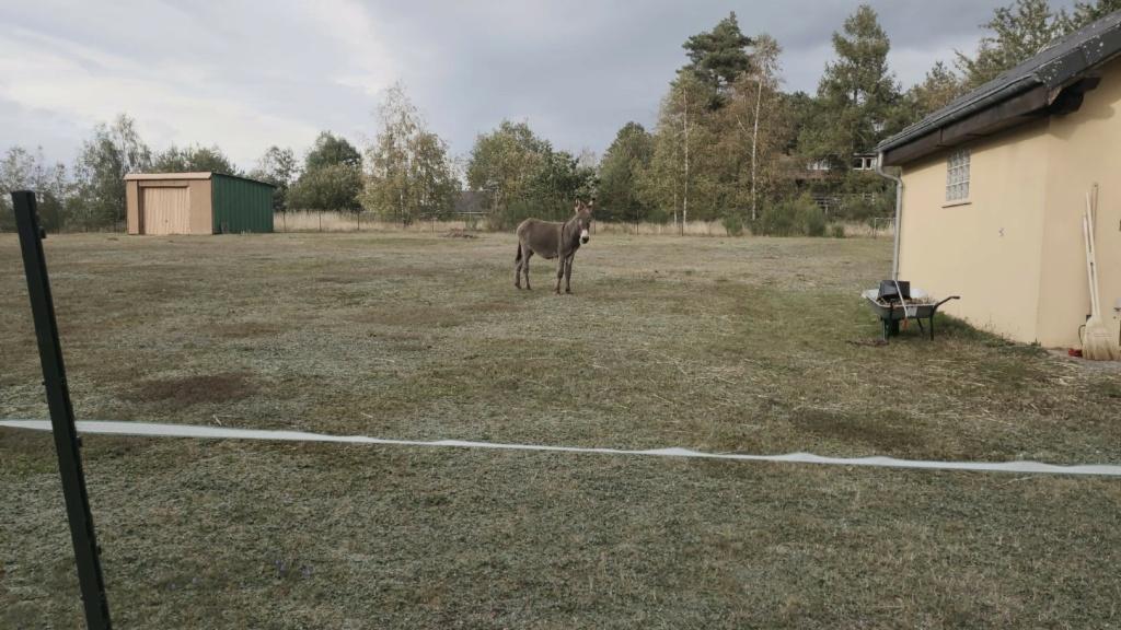 (dept 71) 1 an -POUPY - änon gris - mâle - réservé par christelle (aout 2020) Img_1519
