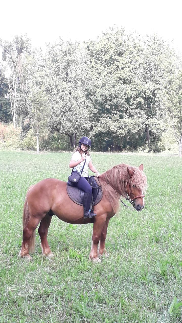 (Dept 71) 4 ans - GASPARD (Mistral) - ONC T - Mâle -Réservé par Nadine E. (avril 2020) Img_1522