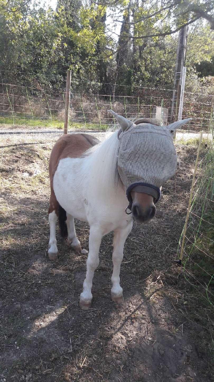 (dept 71) - 11 mois - HAVANNE - onc poney - jument - Nathalie R. (mars 2018) Img_1634
