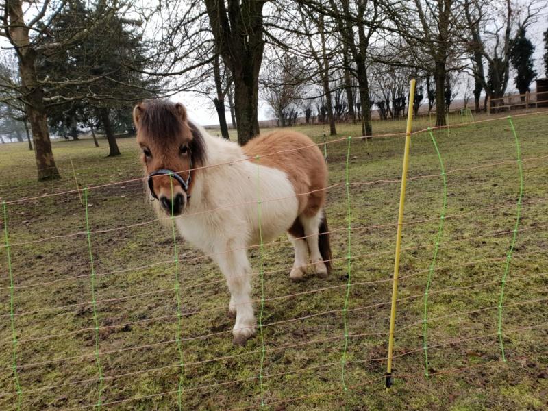 (dept 71) - 11 mois - HAVANNE - onc poney - jument - Nathalie R. (mars 2018) Thumbn15