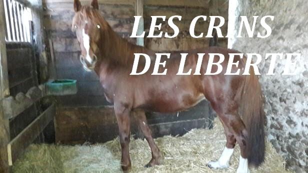 (Dept 37) 13 ans - SAPHIR DE VRY - cheval de selle - Décédé  Unnam201