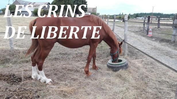 (Dept 37) 13 ans - SAPHIR DE VRY - cheval de selle - Décédé  Unnam202