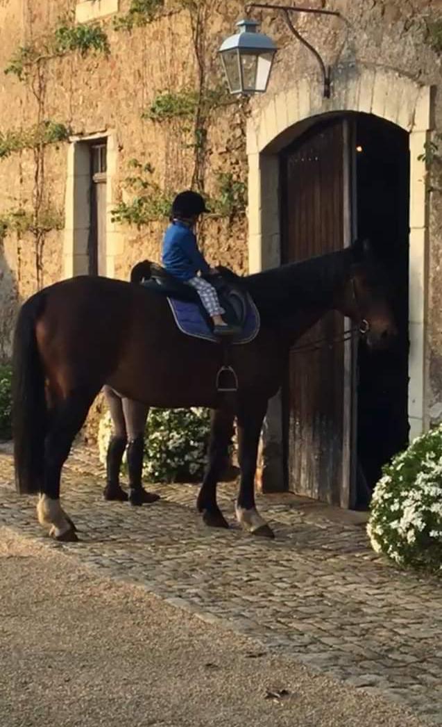 Dt 77, 15 ans, Pepito du Paquis, sauvé par Olivia (2019) Unname24