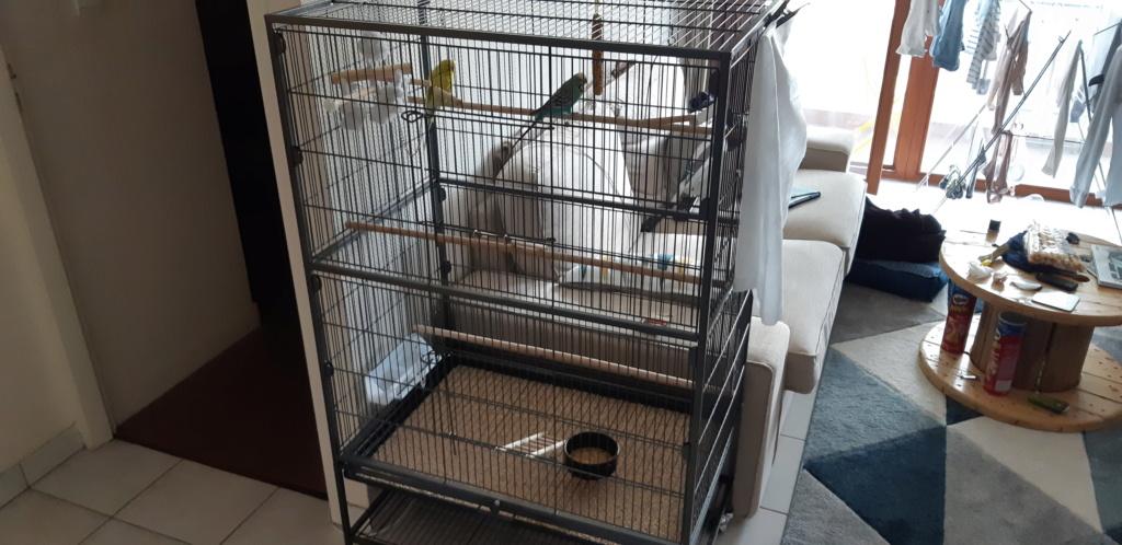 Perchoir à installer sur la cage ? 20190610