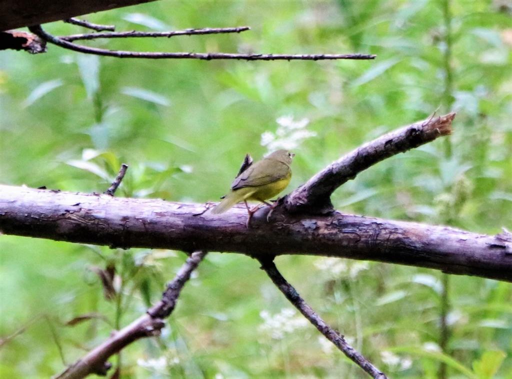 Oiseaux à identifier Img_1310