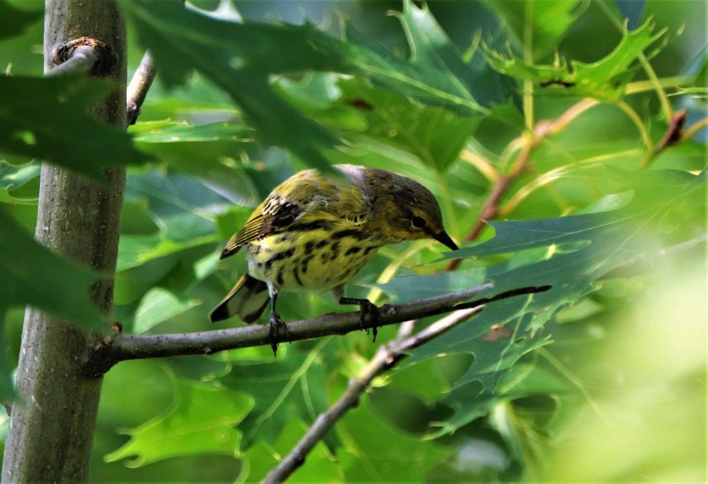 Oiseaux à identifier Img_2211