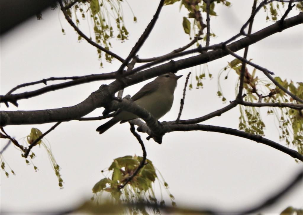 Oiseaux à identifier Img_8614