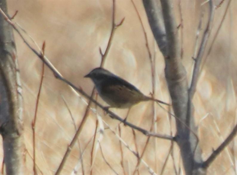 Oiseau à identifier Possib10