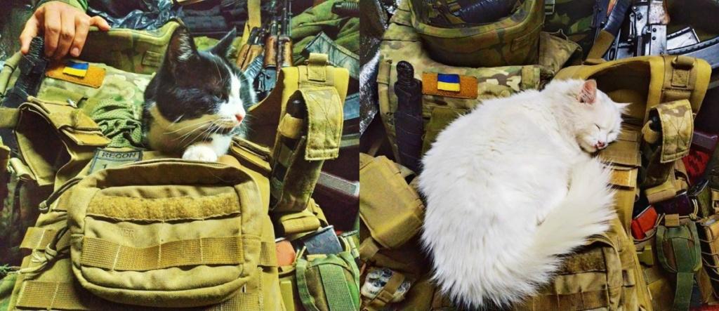 Modern Ukrainian uniform in photographs - Page 32 Yjyt110