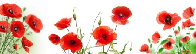 С Днем Победы и памяти!  Uuu10