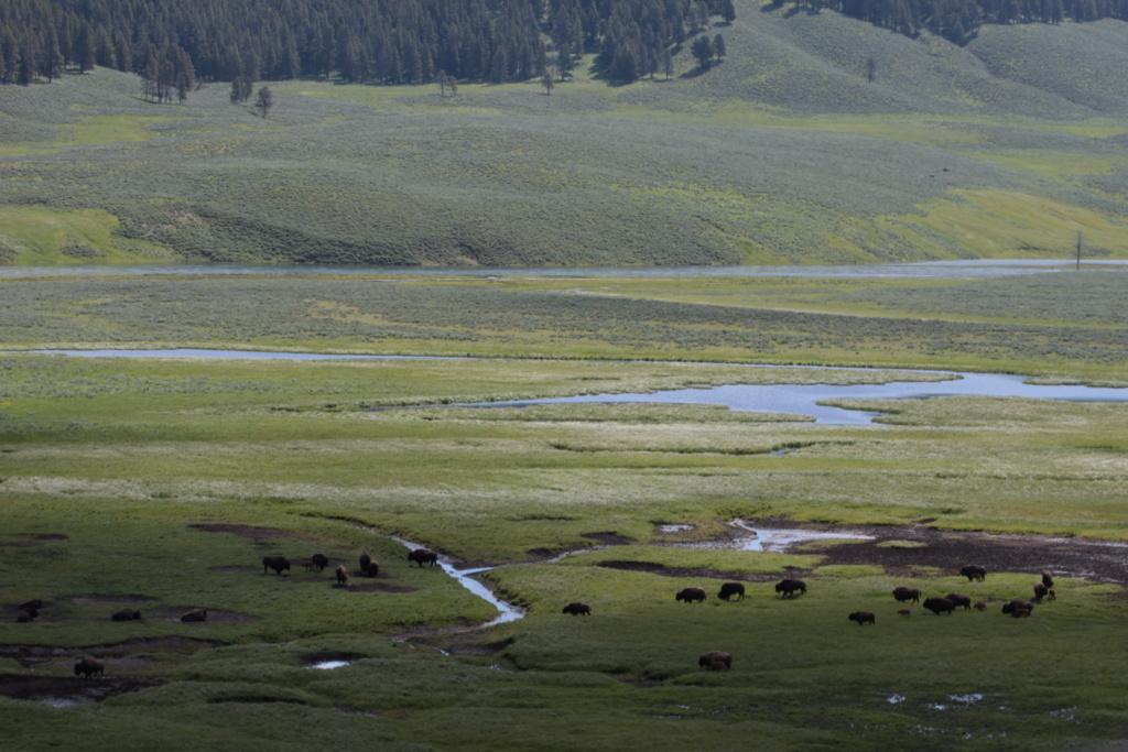Séjour dans le parc américain de Yellowstone en juin 2018 30_can10