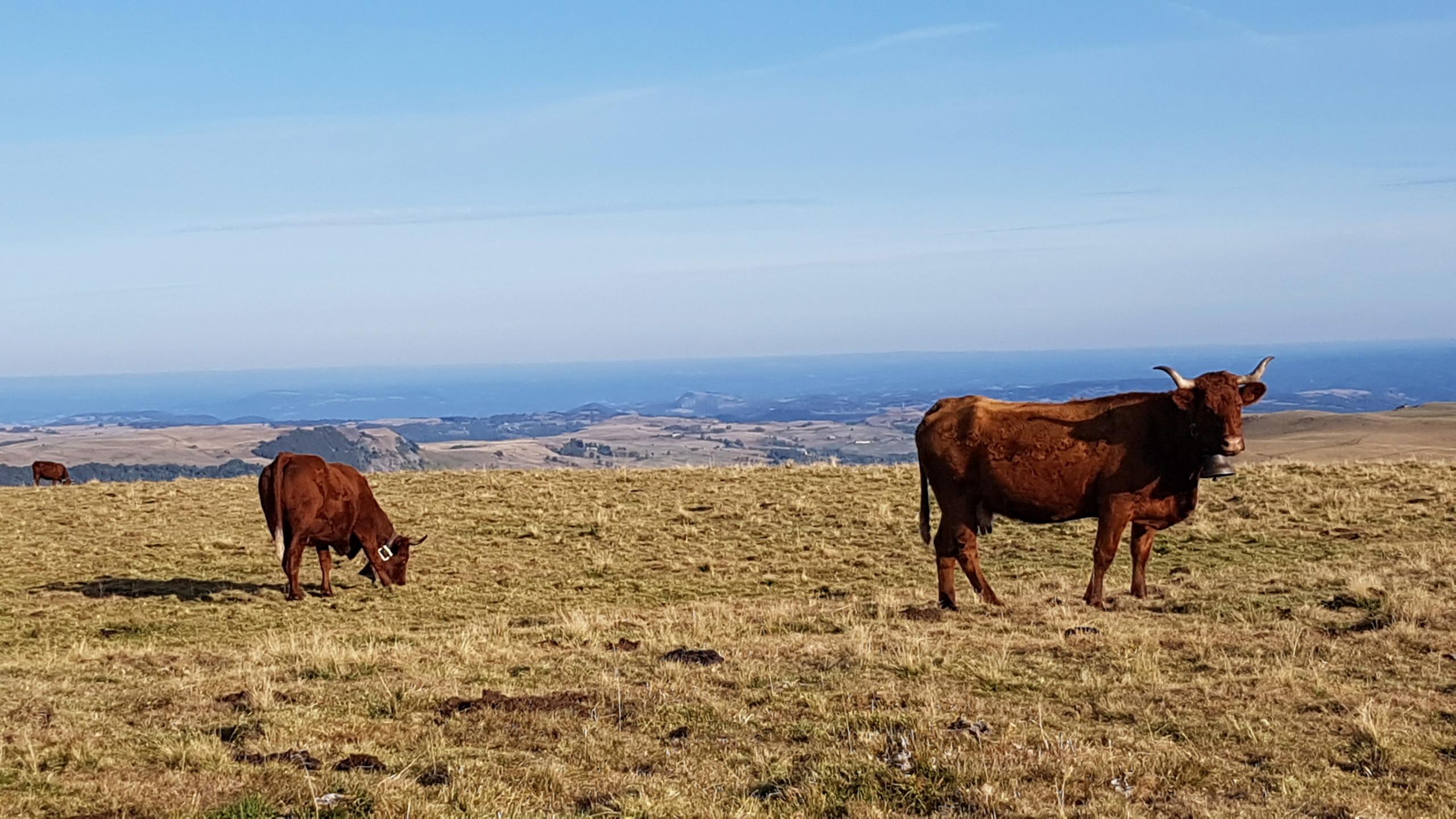 Auvergne - Page 4 20190930