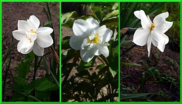 Наши цветы - Страница 27 2_aaaa10