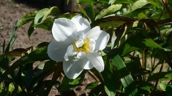 Наши цветы - Страница 27 Aaaao_10