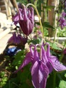 Наши цветы - Страница 27 Sam_1912