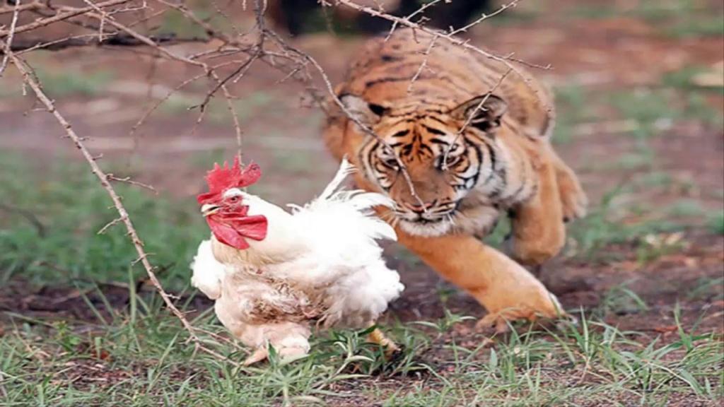 Tigres 6 - 4 Navegantes 28/12/18 (Clasificados) - Página 2 122310