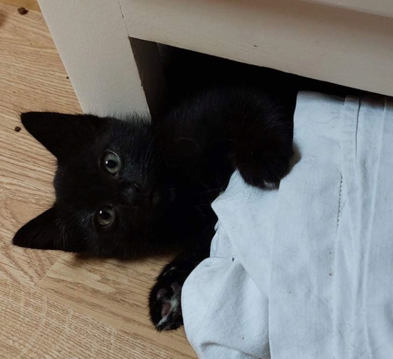 Nos chats à l'adoption 07562210