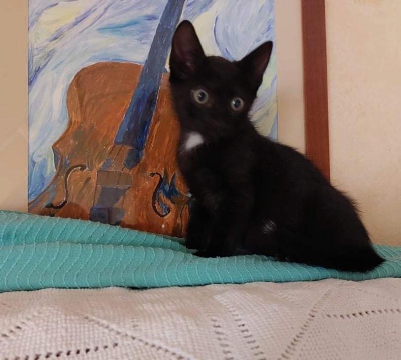 Nos chats à l'adoption 51b66910