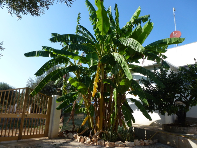 Aus einer Wüste entsteht ein Exotengarten - Seite 24 P1000628