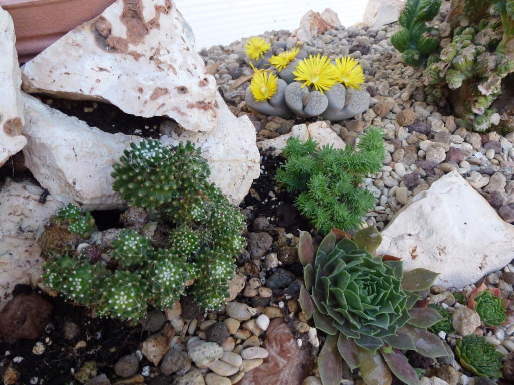 Aus einer Wüste entsteht ein Exotengarten - Seite 24 P1000629