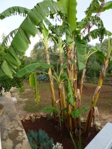 Aus einer Wüste entsteht ein Exotengarten - Seite 32 P1010232