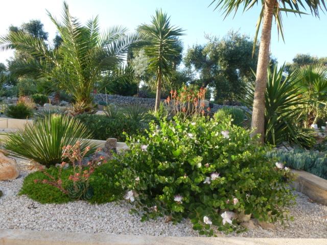 Aus einer Wüste entsteht ein Exotengarten - Seite 32 P1010233