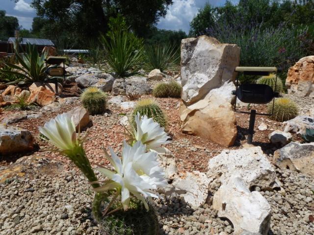 Aus einer Wüste entsteht ein Exotengarten - Seite 32 P1010237