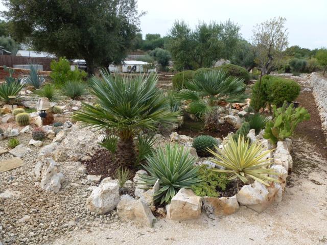 Aus einer Wüste entsteht ein Exotengarten - Seite 45 P1020011