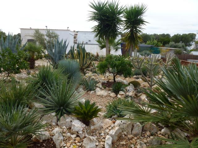 Aus einer Wüste entsteht ein Exotengarten - Seite 45 P1020012