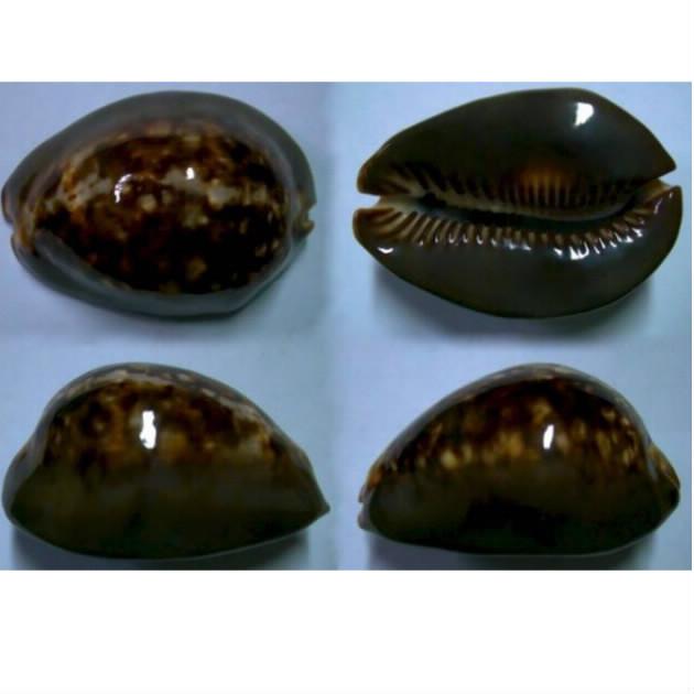 mauritia mauritiana niger ?? Maurit15