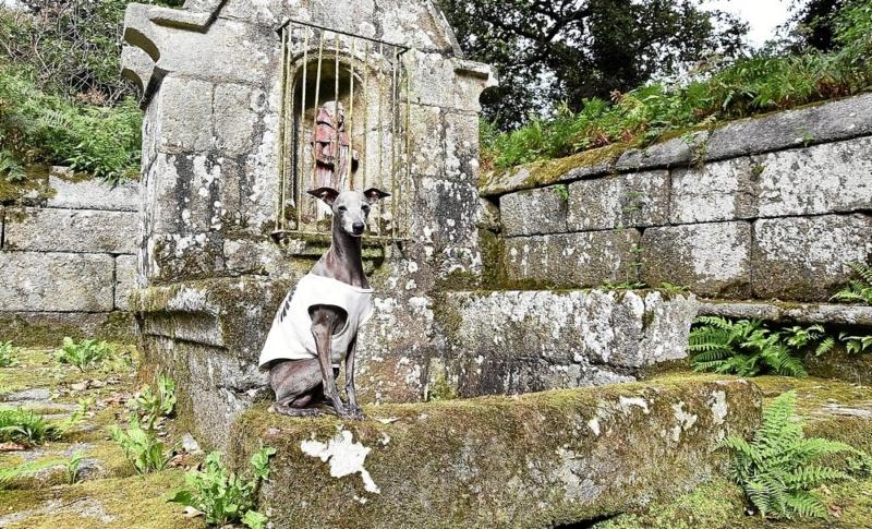 Une fontaine miraculeuse pour les chiens Patrim10